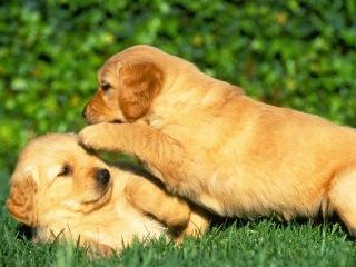 hermosos caninos en el pasto